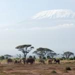 Safari im Amboseli Nationalpark