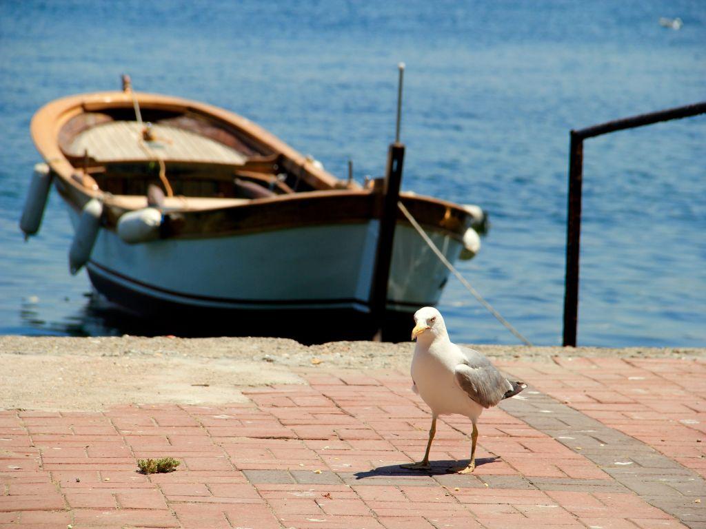 fischerboot-moewe