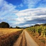 Weg Richtung Sarria
