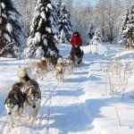 Huskyschlittenfahrt Finnland