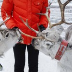 Rentierfütterung Ruka Finnland